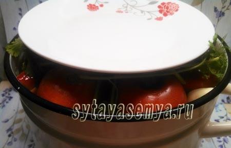 solenye-pomidory-s-gorchicej-7