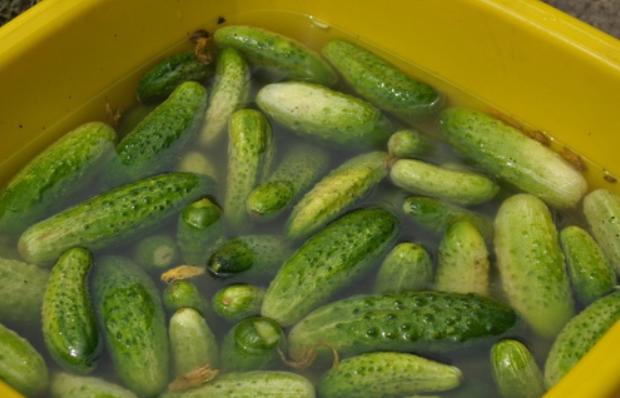 Солёные огурцы в банках холодным способом как бочковые: рецепты с фото